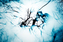 about the trees von Elena Laska