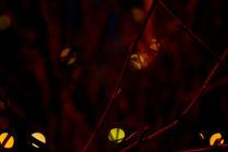 magic lights von Elena Laska