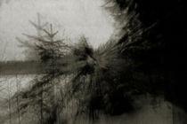 pines are coming by Elena Laska