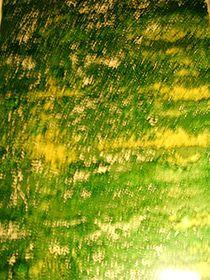grüne Hölle by Theodor Fischer