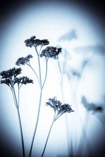 Plants von Detlef Koethner