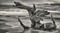driftwood seascape von Mike Kaplan