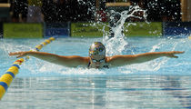 dolphin swimming von Bor Rojnik