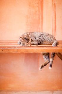 'Cat' by Sam Loman