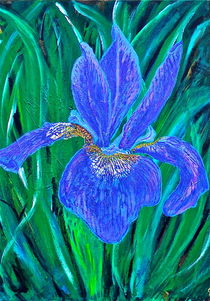 Bearded Purple Iris von Christine Chase Cooper