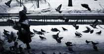 what happens if you feed birds by Elena Laska