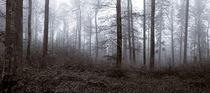 Der Nebelwald by kunstwert