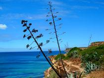 Aloevera auf Steielküste(Portugal Algarve) von jefroh