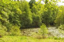 Frühling im Naturpark Schönbuch - Schlüsselsee Schaichtal von Matthias Hauser