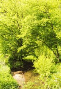 Leuchtend grüne Bäume im Frühling - Naturpark Schönbuch by Matthias Hauser