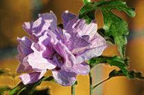Flower by Ralf Schroers