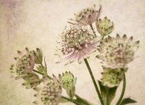 nostalgic flowers von Franziska Rullert