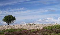 Lonely Rowan by Jukka Palm