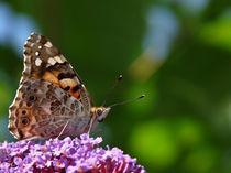 Schmetterling by Uwe Karmrodt