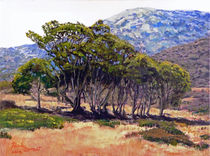 Eucalyptus Grove Catalina Island von Randy Sprout