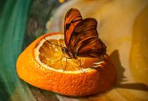 Flutterby by Leonard Lea