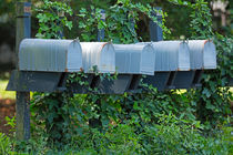 Mailboxes and Ivy by Louise Heusinkveld