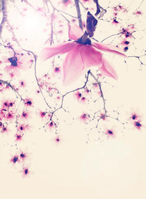 Magnolia Star by Linde Townsend
