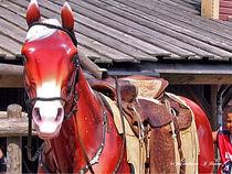 Holzpferd, Pferde, Tiere von shark24