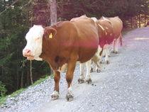 Drei Kühe im Gänsemarsch von Fanny Prankl
