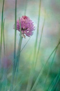 chive garden by Priska  Wettstein