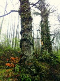 TREES  von massimiliano cori