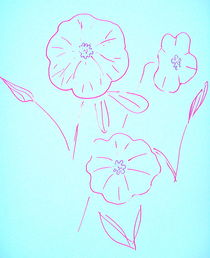 Morning Glory Sketch by Christine Chase Cooper