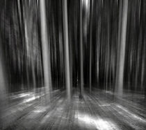 Moving Forest B&W by florin