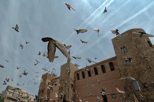Dancing-birds