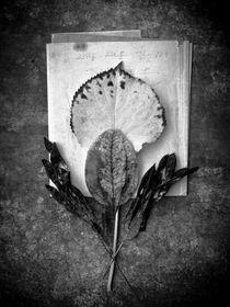 Stilleben I by Alfred Derks