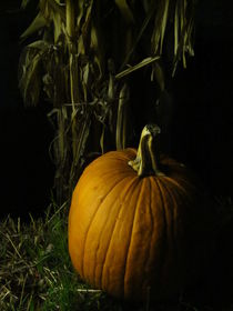 Pumpkin Pumpkin Big and Round by Guy  Ricketts