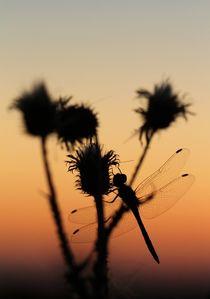 Dragonfly Sunset by Jukka Palm