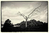 Der Baum ist tot von Alfred Derks