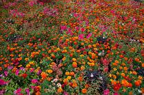 Blumen by Alfred Derks