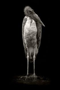 Marabu by Alfred Derks