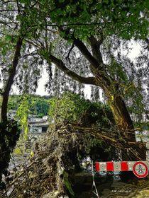 Baum an der Donau aq digi von badauarts