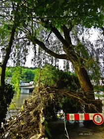 Passau Baum am Donauufer hc by badauarts