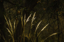 Sunlit by Barbara Magnuson & Larry Kimball