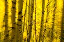 Scco-0336-aspen-grove