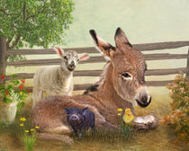 Donkey-laying-c
