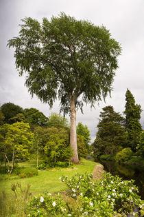 Baum im Schlosspark von Birr Castle von Karsten Müller