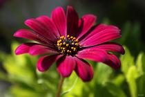 pink beauty von meleah