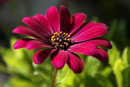 Pink-beauty