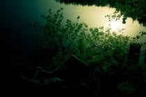 lake, trees and sunshine by Elena Laska