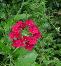Rot im Grün von Silke Bicker