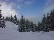 Winter 2 von Fanny Prankl