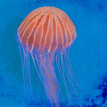 Jellyfish von David Pringle
