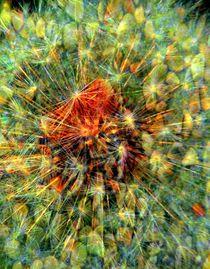 Pollenflug von Peter Norden