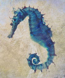 Seahorse von David Pringle