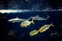 Swimming Fish von olgasart